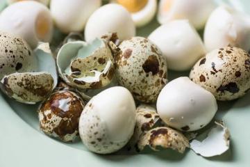muitos ovos de codorna, inteiros, cozidos e quebrados