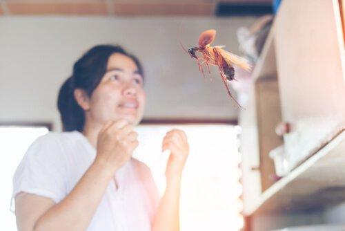 barata voando em direção a uma mulher
