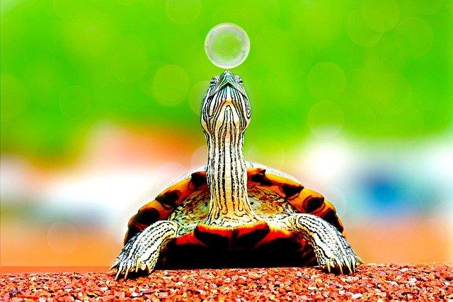 tartaruga muito pequena andando na natureza