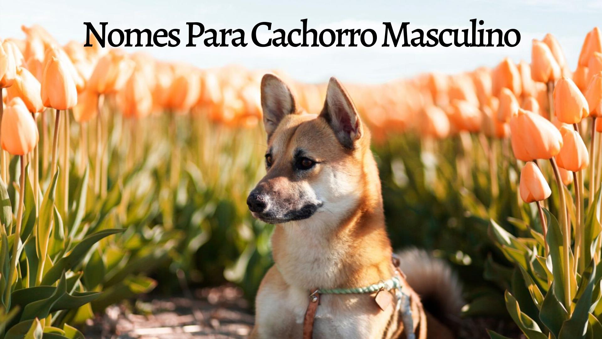 cachorro em uma imagem escrita nomes para cachorro masculino