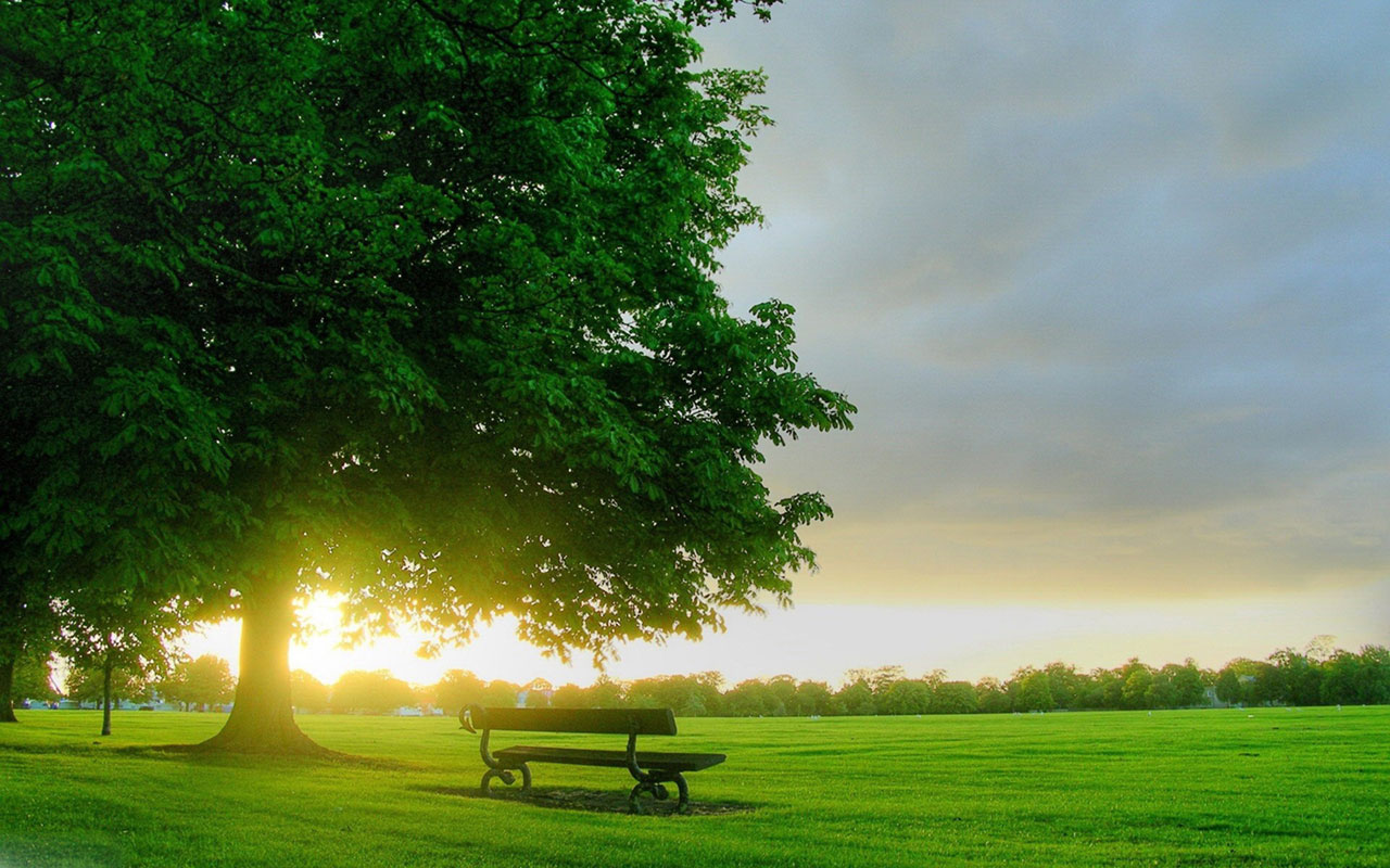 dia feliz, manhã abençoada, foto de um lindo dia