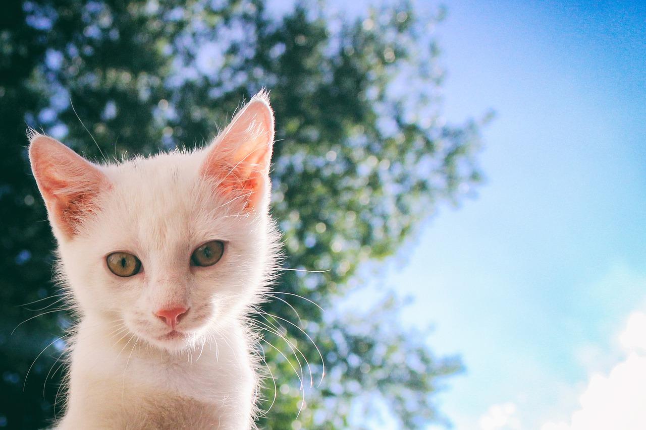 gato branco em cima de uma árvore