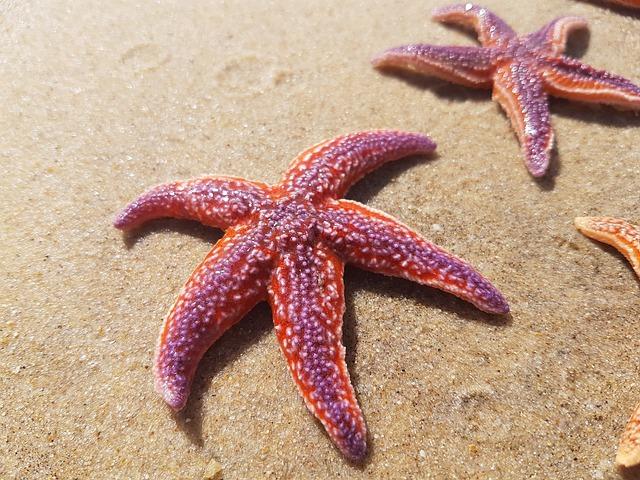 estrelas do mar vermelhas na areia da praia