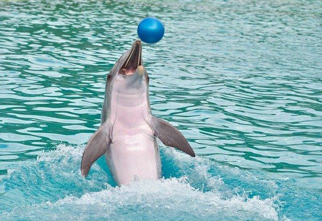 golfinho saltando no mar brincando com bola