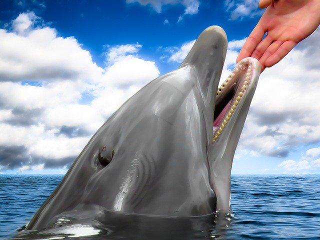 mão humana acariciando um golfinho