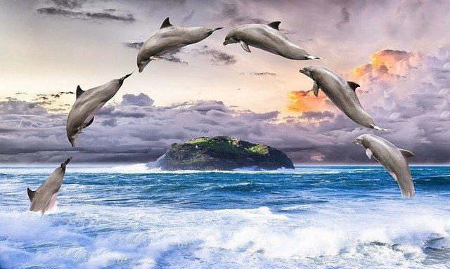 golfinhos saltando no mar