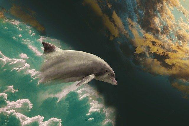 golfinho saindo do mar em direção ao céu