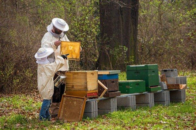 apicultor trabalhando com mel