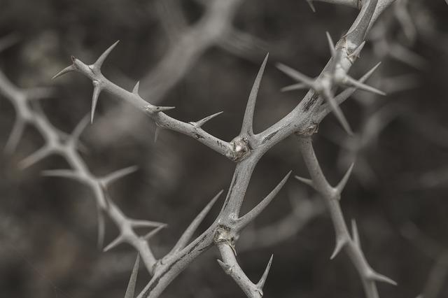 espinhos pontudos que espetam