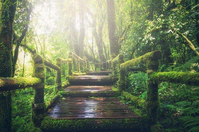 ponte de madeira no meio de uma floresta