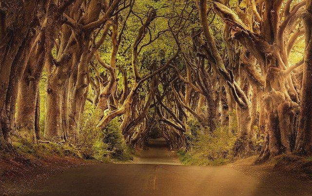 floresta fechada de muitas árvores