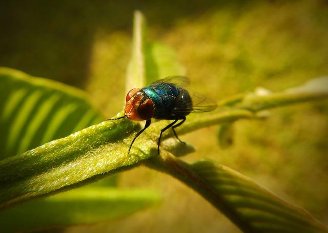 mosquito azul em galho verde