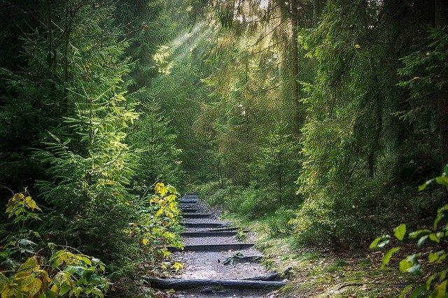 floresta verde com um caminho de escada