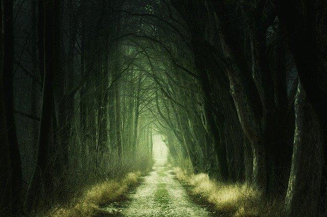 trilha reta em uma floresta escura