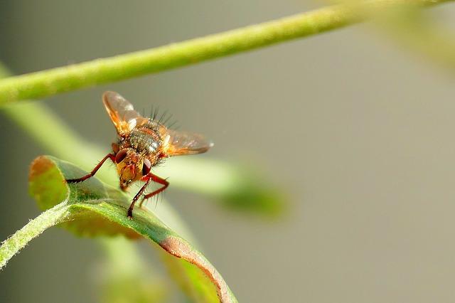 mosquito marrom em cima de uma planta
